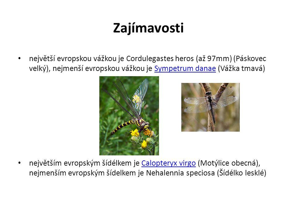 Zajímavosti největší evropskou vážkou je Cordulegastes heros (až 97mm) (Páskovec velký), nejmenší evropskou vážkou je Sympetrum danae (Vážka tmavá)