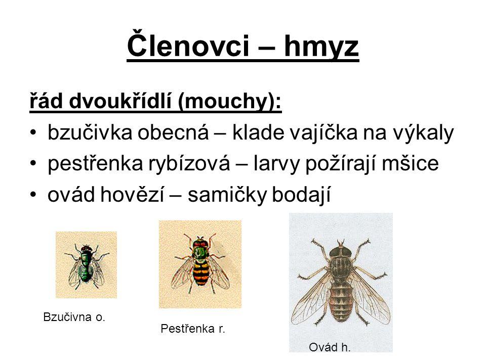 Členovci – hmyz řád dvoukřídlí (mouchy):