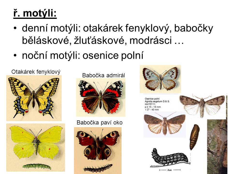 noční motýli: osenice polní