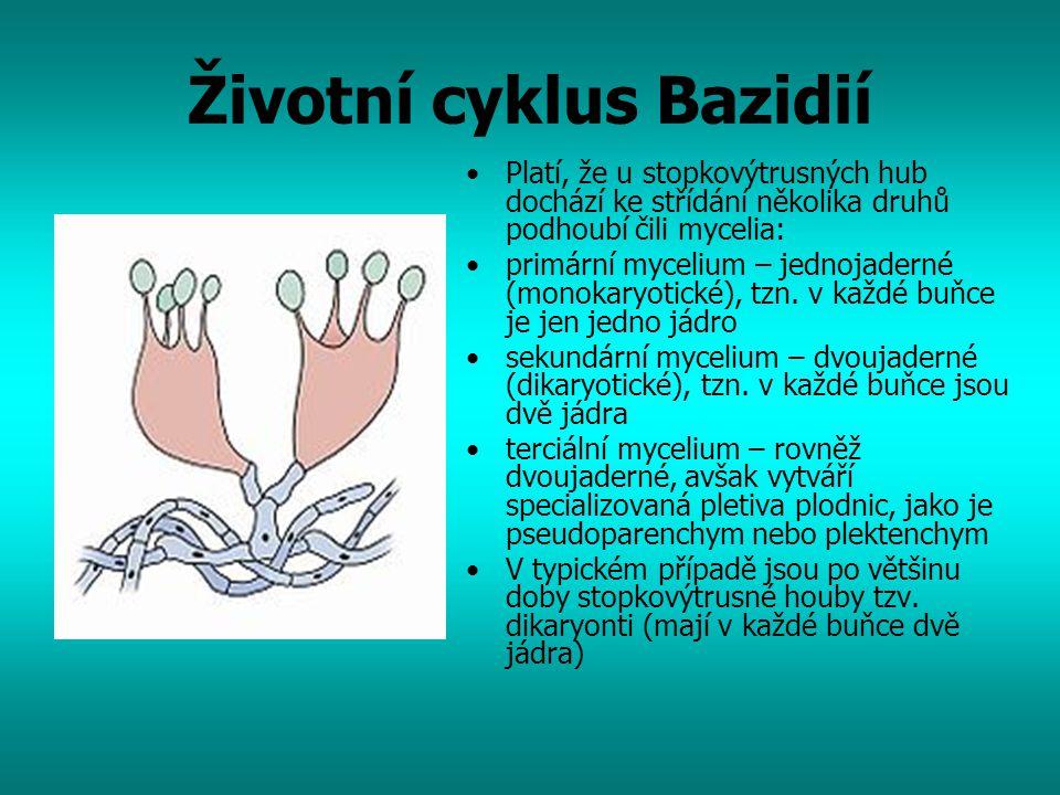 Životní cyklus Bazidií