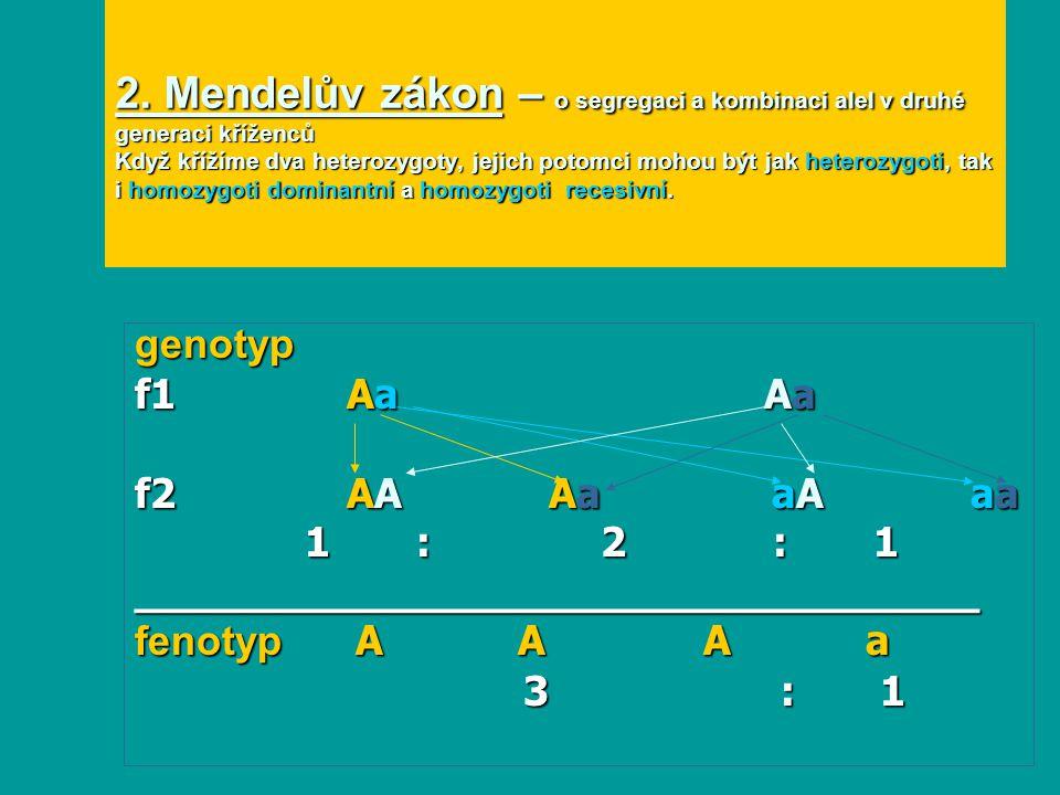 2. Mendelův zákon – o segregaci a kombinaci alel v druhé generaci kříženců Když křížíme dva heterozygoty, jejich potomci mohou být jak heterozygoti, tak i homozygoti dominantní a homozygoti recesivní.