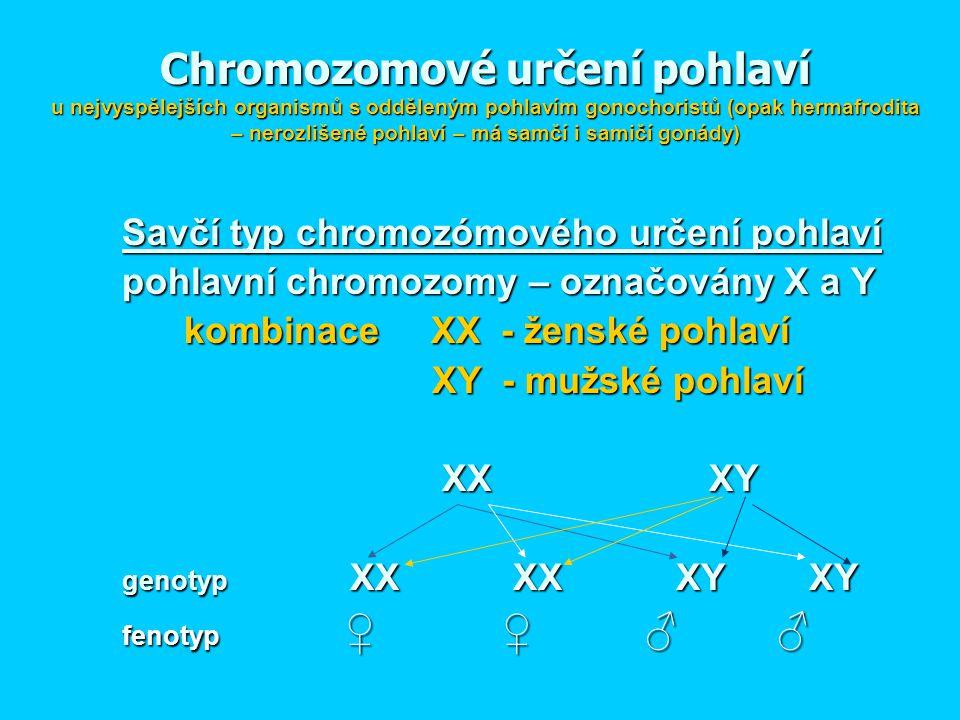 Chromozomové určení pohlaví u nejvyspělejších organismů s odděleným pohlavím gonochoristů (opak hermafrodita – nerozlišené pohlaví – má samčí i samičí gonády)