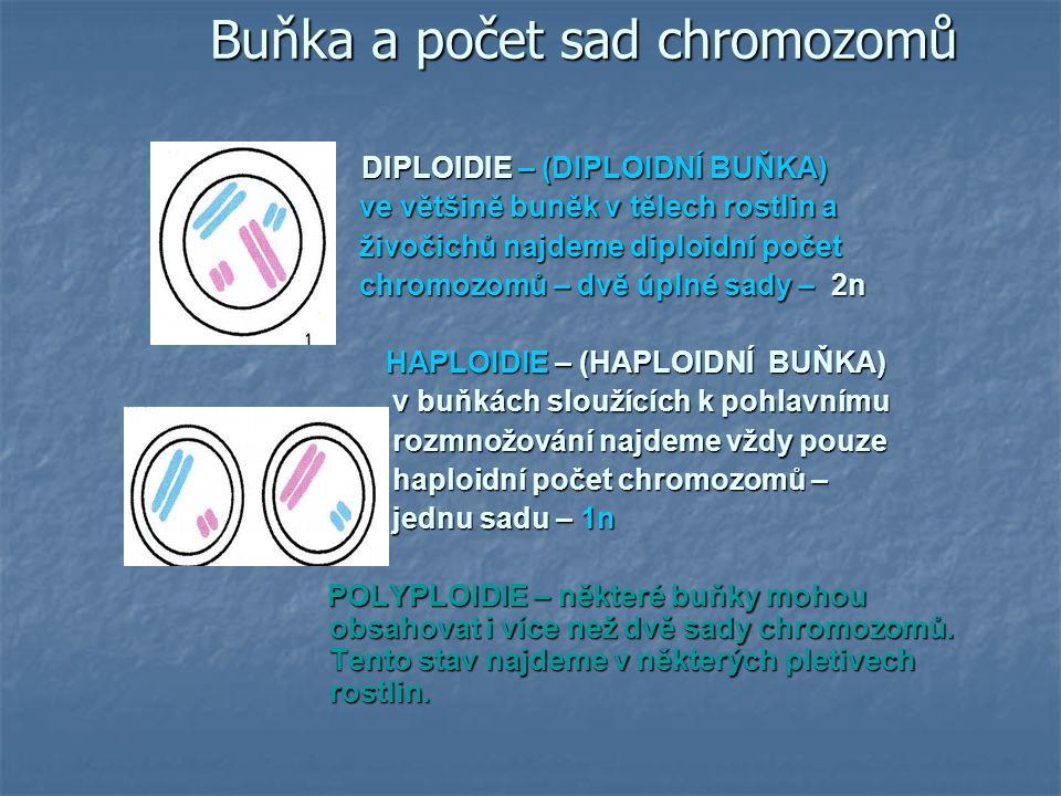 Buňka a počet sad chromozomů
