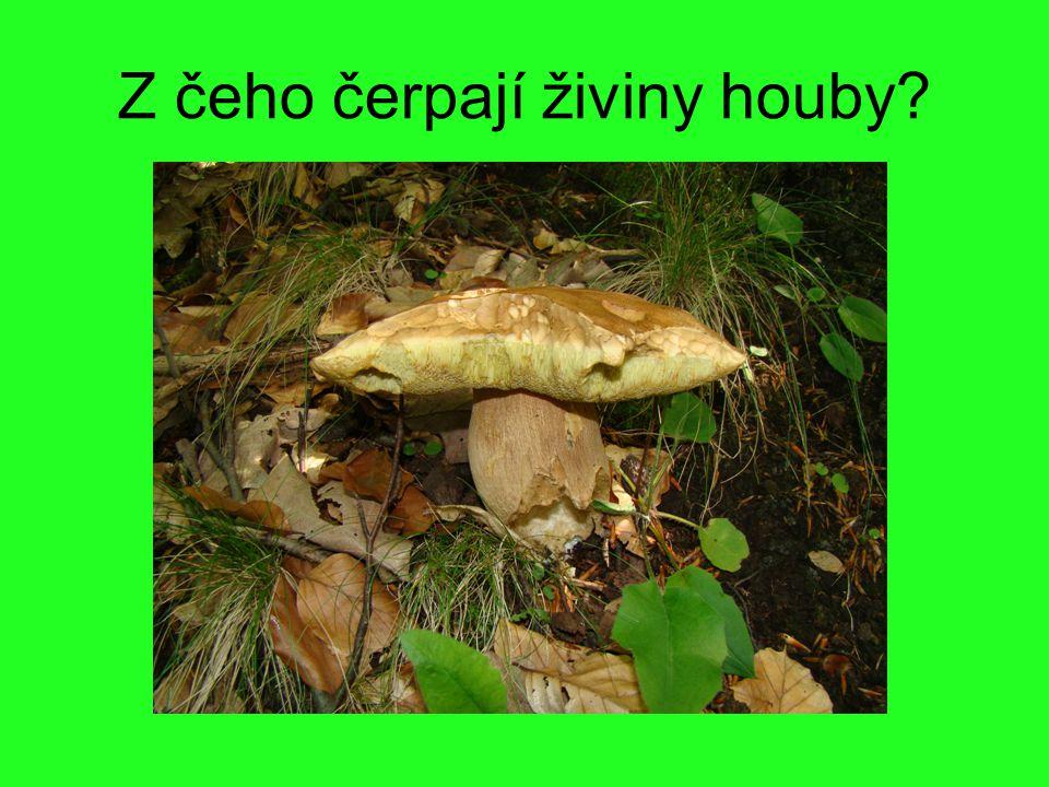 Z čeho čerpají živiny houby