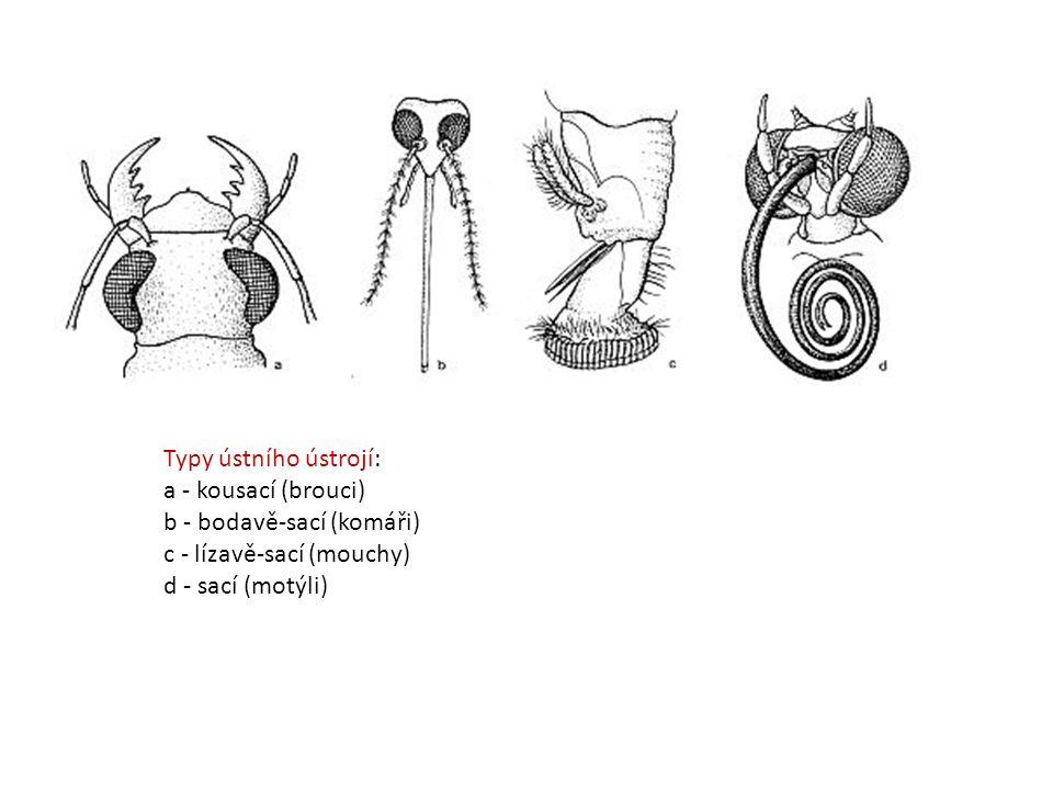 Typy ústního ústrojí: a - kousací (brouci) b - bodavě-sací (komáři) c - lízavě-sací (mouchy) d - sací (motýli)