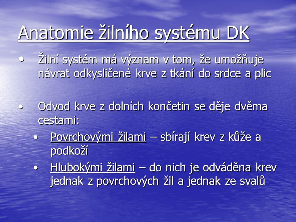 Anatomie žilního systému DK