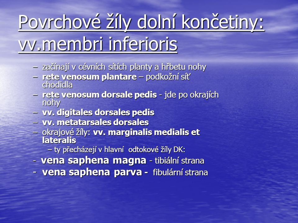 Povrchové žíly dolní končetiny: vv.membri inferioris
