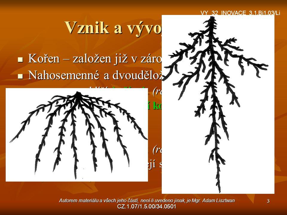 Vznik a vývoj kořene Kořen – založen již v zárodku semene