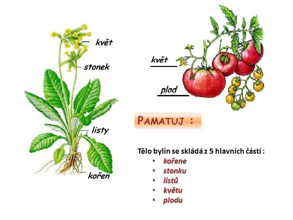 Pamatuj : Tělo bylin se skládá z 5 hlavních částí : kořene stonku