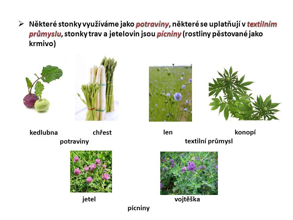 Některé stonky využíváme jako potraviny, některé se uplatňují v textilním průmyslu, stonky trav a jetelovin jsou pícniny (rostliny pěstované jako krmivo)
