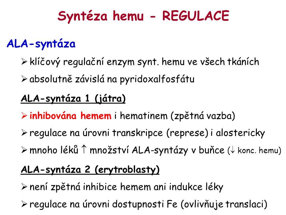 Syntéza hemu - REGULACE