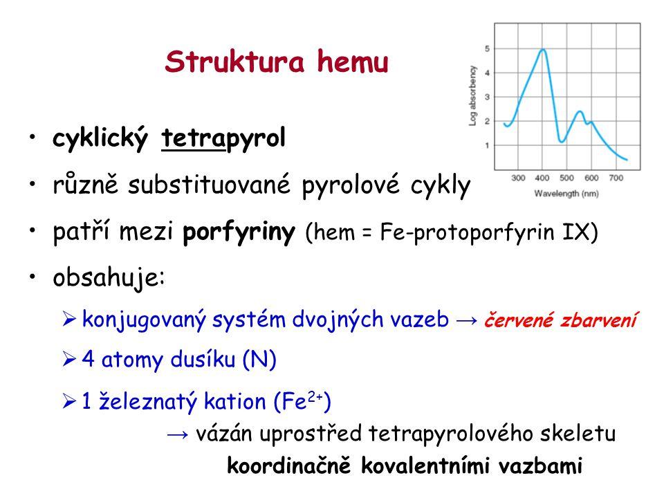 Struktura hemu cyklický tetrapyrol různě substituované pyrolové cykly