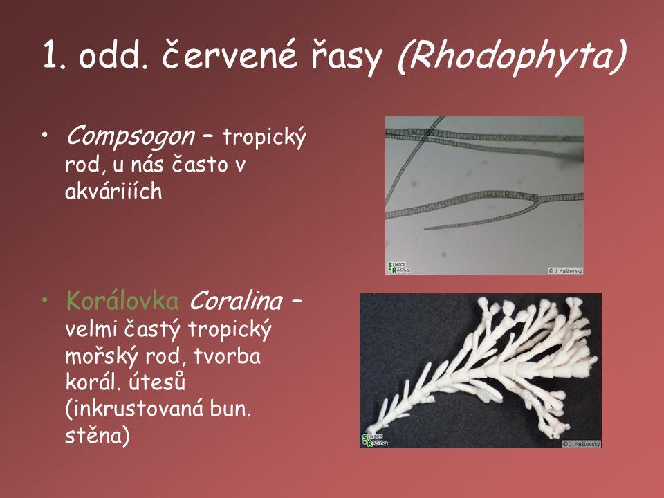 1. odd. červené řasy (Rhodophyta)
