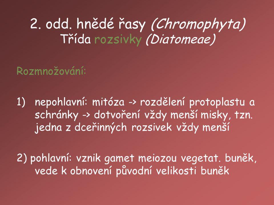 2. odd. hnědé řasy (Chromophyta) Třída rozsivky (Diatomeae)