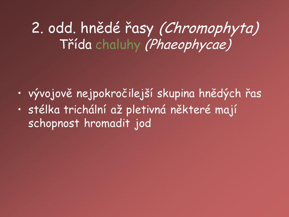 2. odd. hnědé řasy (Chromophyta) Třída chaluhy (Phaeophycae)