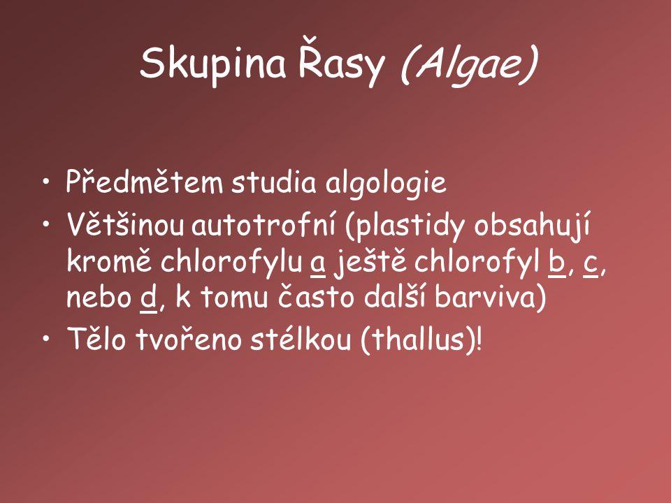 Skupina Řasy (Algae) Předmětem studia algologie