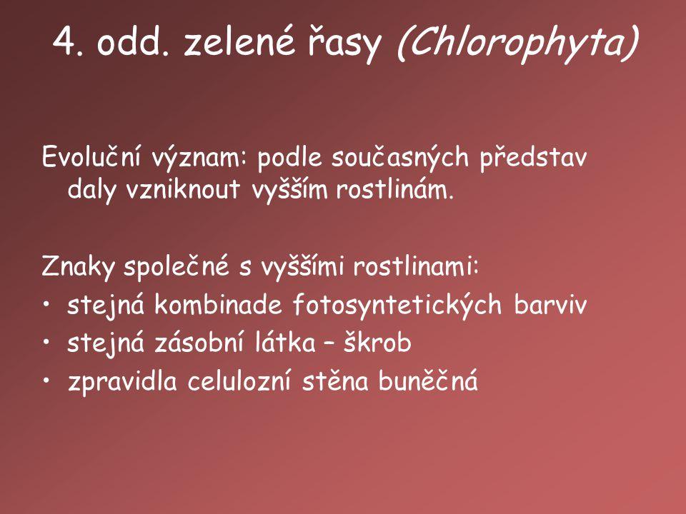 4. odd. zelené řasy (Chlorophyta)