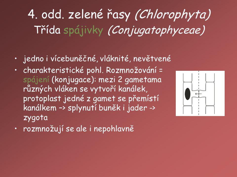 4. odd. zelené řasy (Chlorophyta) Třída spájivky (Conjugatophyceae)