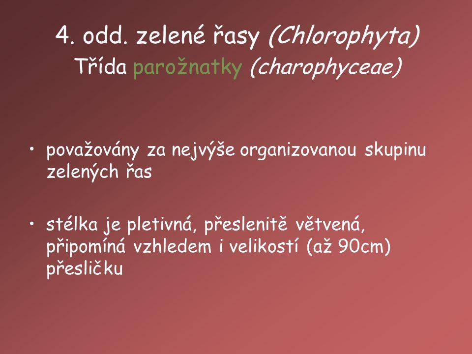 4. odd. zelené řasy (Chlorophyta) Třída parožnatky (charophyceae)