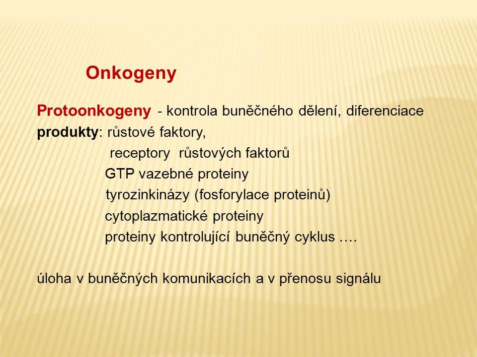 Onkogeny Protoonkogeny - kontrola buněčného dělení, diferenciace produkty: růstové faktory,