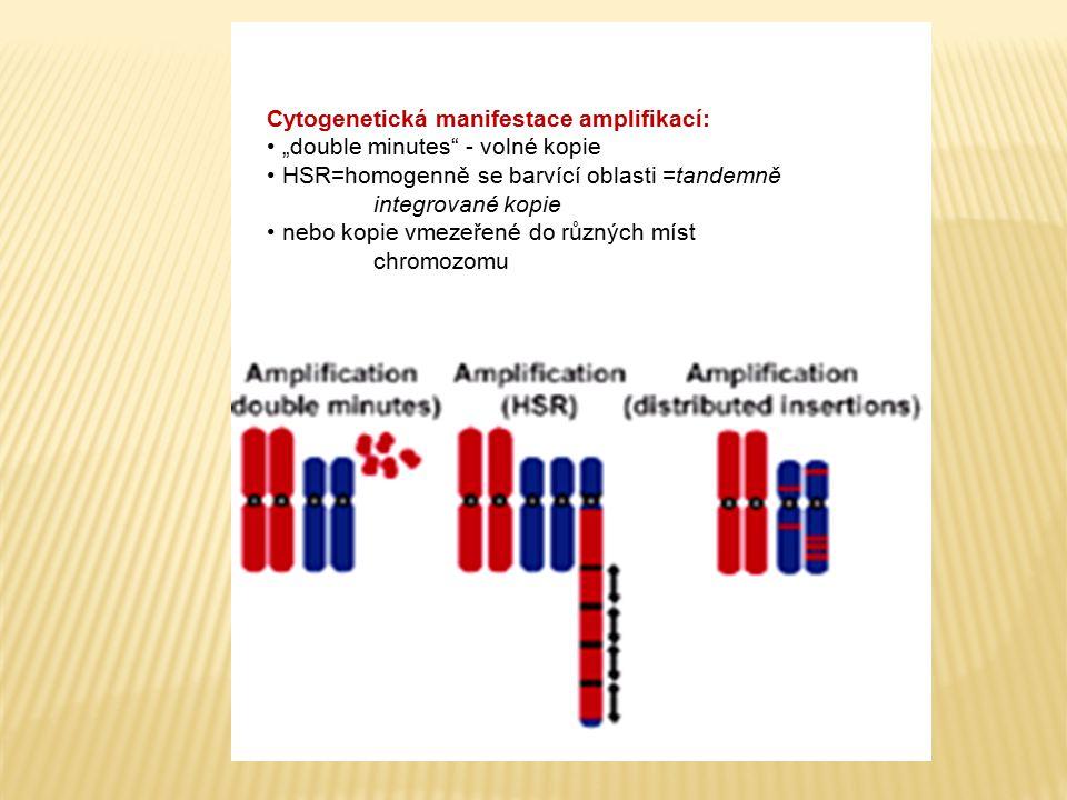 Cytogenetická manifestace amplifikací: