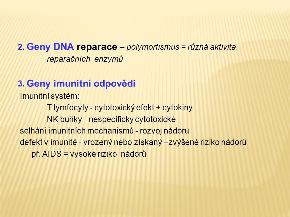 2. Geny DNA reparace – polymorfismus = různá aktivita