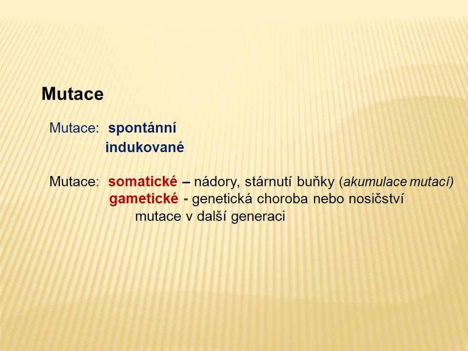 Mutace Mutace: spontánní indukované