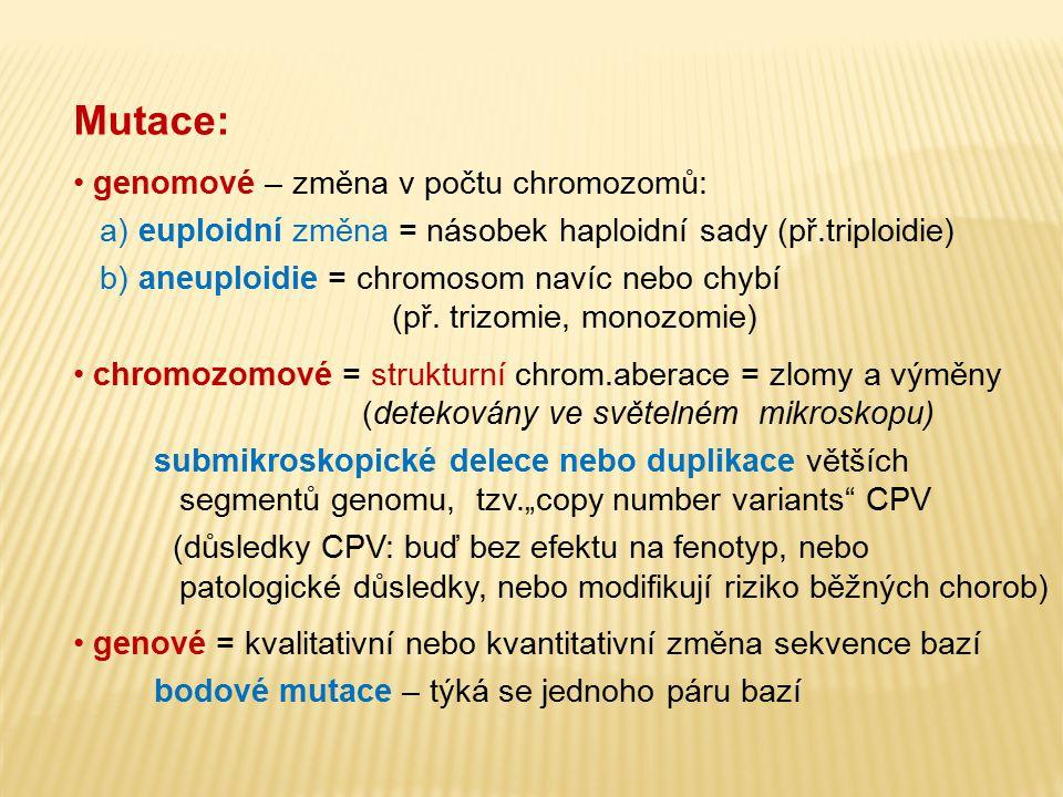 Mutace: genomové – změna v počtu chromozomů: