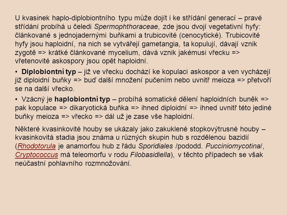 U kvasinek haplo-diplobiontního typu může dojít i ke střídání generací – pravé střídání probíhá u čeledi Spermophthoraceae, zde jsou dvojí vegetativní hyfy: článkované s jednojadernými buňkami a trubicovité (cenocytické). Trubicovité hyfy jsou haploidní, na nich se vytvářejí gametangia, ta kopulují, dávají vznik zygotě => krátké článkované mycelium, dává vznik jakémusi vřecku => vřetenovité askospory jsou opět haploidní.