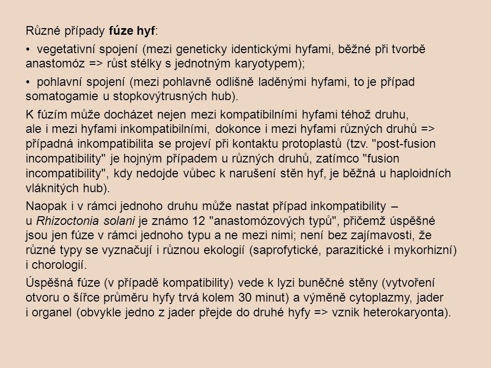 Různé případy fúze hyf: