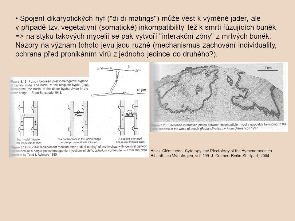 • Spojení dikaryotických hyf ( di-di-matings ) může vést k výměně jader, ale v případě tzv. vegetativní (somatické) inkompatibility též k smrti fúzujících buněk => na styku takových mycelií se pak vytvoří interakční zóny z mrtvých buněk. Názory na význam tohoto jevu jsou různé (mechanismus zachování individuality, ochrana před pronikáním virů z jednoho jedince do druhého ).