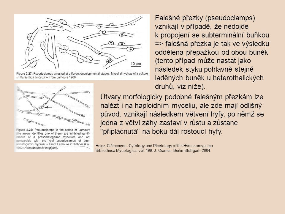 Falešné přezky (pseudoclamps) vznikají v případě, že nedojde k propojení se subterminální buňkou => falešná přezka je tak ve výsledku oddělena přepážkou od obou buněk (tento případ může nastat jako následek styku pohlavně stejně laděných buněk u heterothalických druhů, viz níže).