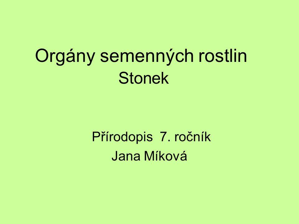 Orgány semenných rostlin Stonek