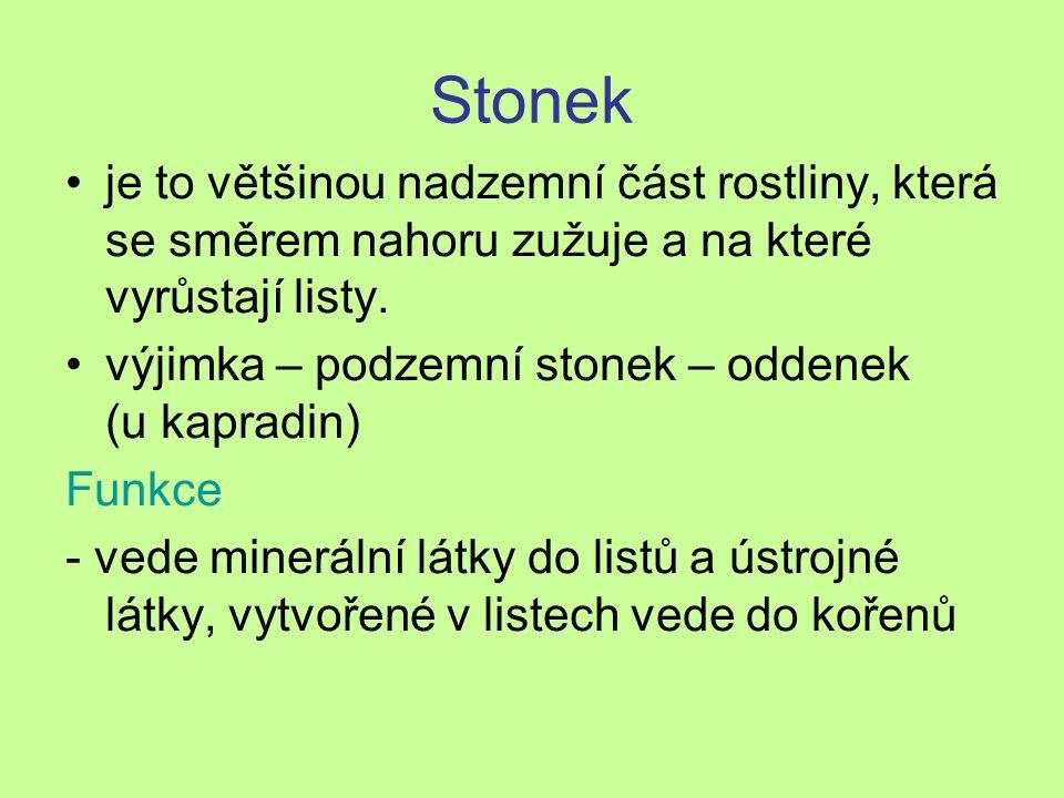 Stonek je to většinou nadzemní část rostliny, která se směrem nahoru zužuje a na které vyrůstají listy.