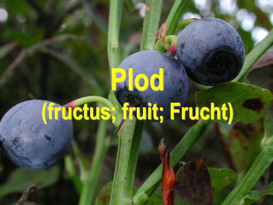 Plod (fructus; fruit; Frucht)