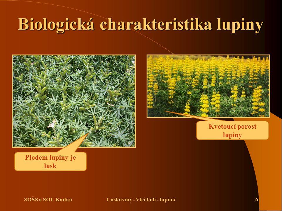 Biologická charakteristika lupiny