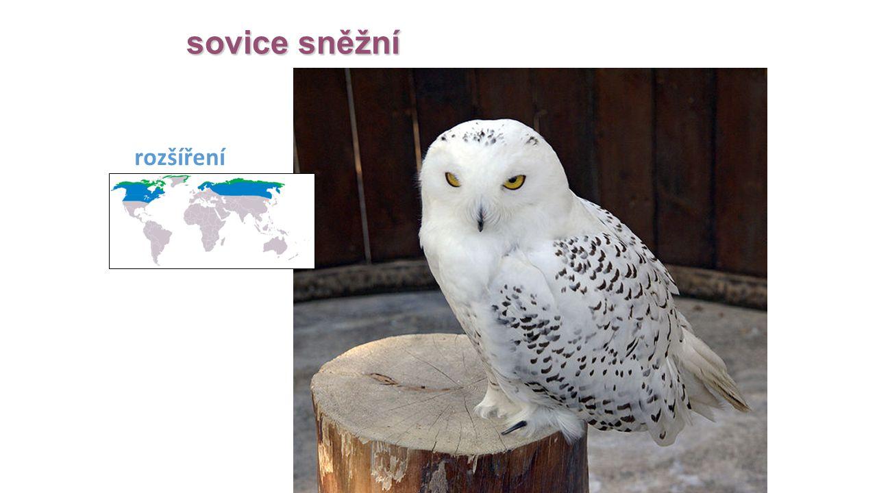 sovice sněžní rozšíření