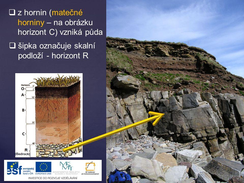 z hornin (matečné horniny – na obrázku horizont C) vzniká půda