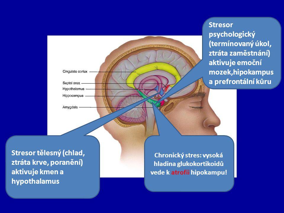 Stresor psychologický (termínovaný úkol, ztráta zaměstnání) aktivuje emoční mozek,hipokampus a prefrontální kůru