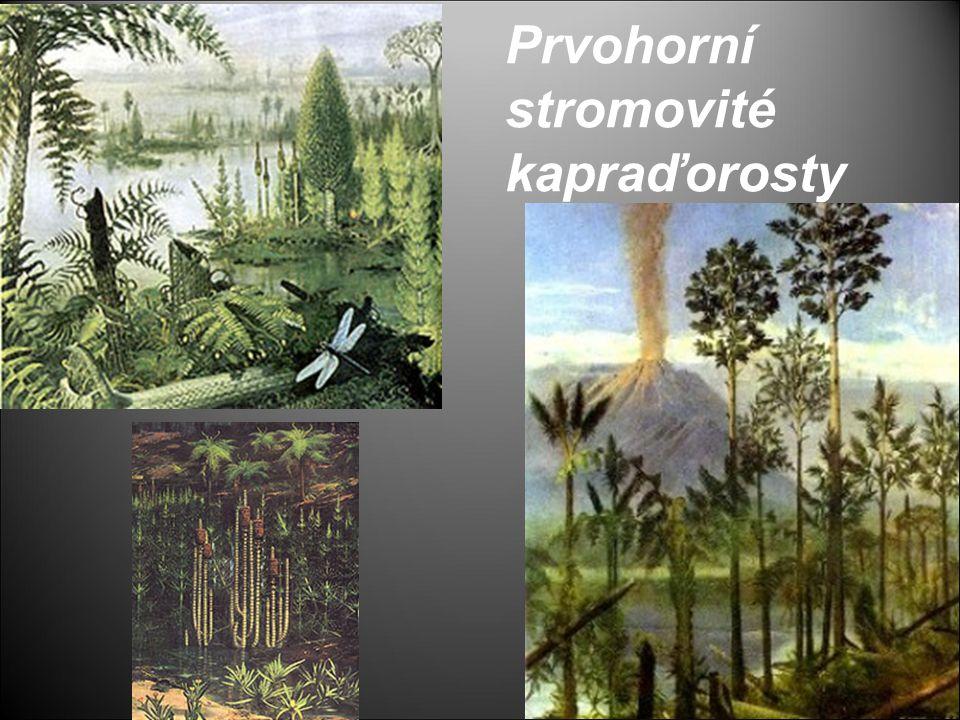 Prvohorní stromovité kapraďorosty