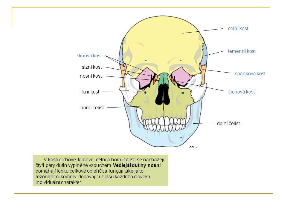 čelní kost temenní kost klínová kost slzní kost spánková kost