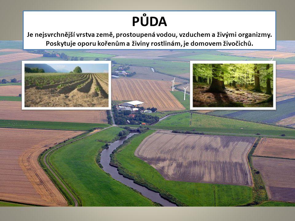 Poskytuje oporu kořenům a živiny rostlinám, je domovem živočichů.