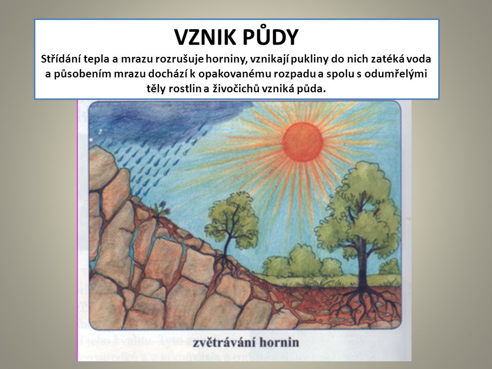 VZNIK PŮDY Střídání tepla a mrazu rozrušuje horniny, vznikají pukliny do nich zatéká voda.