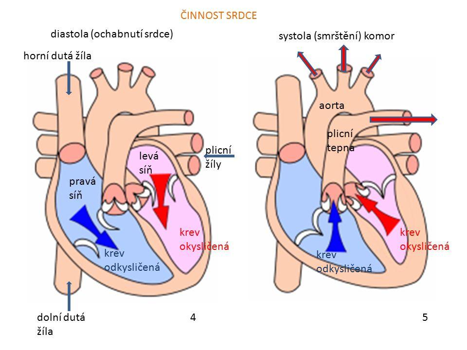 ČINNOST SRDCE diastola (ochabnutí srdce) systola (smrštění) komor. horní dutá žíla. aorta. plicní tepna.