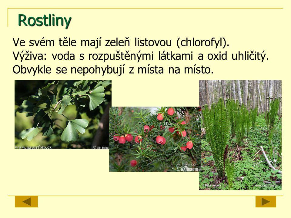 Rostliny Ve svém těle mají zeleň listovou (chlorofyl).