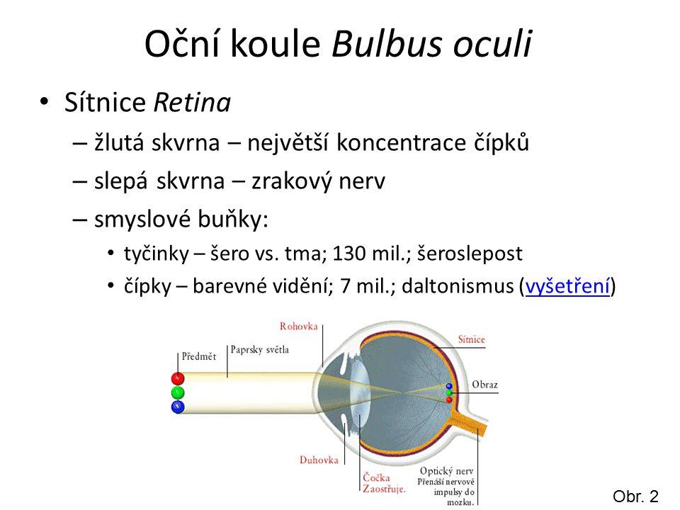 Oční koule Bulbus oculi