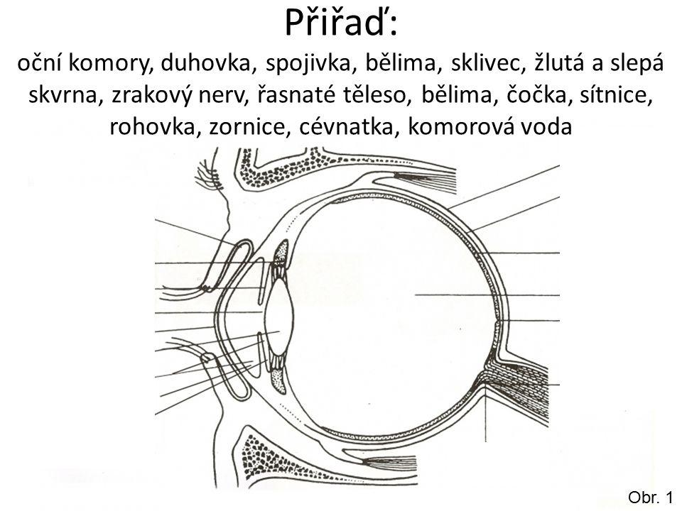 Přiřaď: oční komory, duhovka, spojivka, bělima, sklivec, žlutá a slepá skvrna, zrakový nerv, řasnaté těleso, bělima, čočka, sítnice, rohovka, zornice, cévnatka, komorová voda