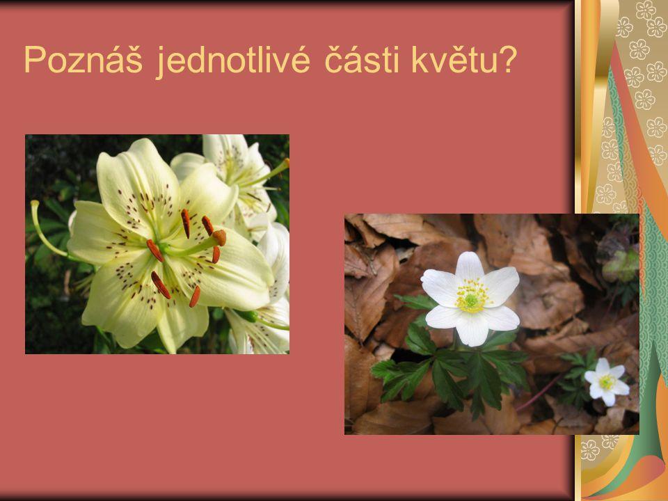 Poznáš jednotlivé části květu