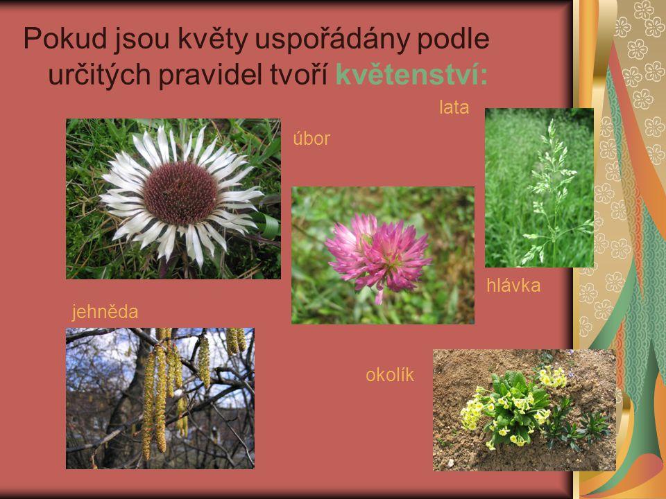Pokud jsou květy uspořádány podle určitých pravidel tvoří květenství: