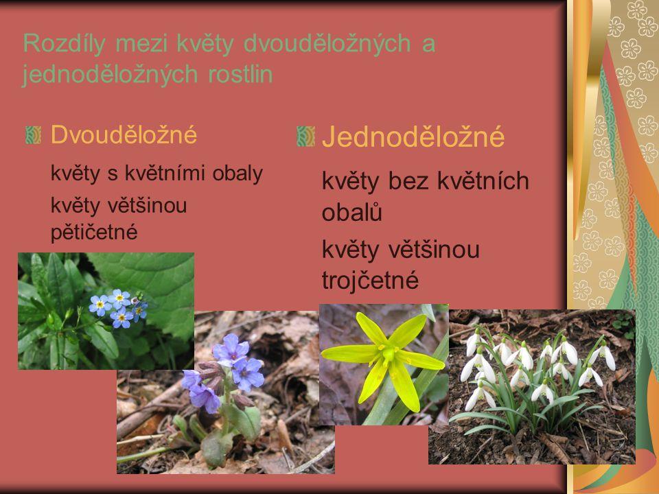 Rozdíly mezi květy dvouděložných a jednoděložných rostlin